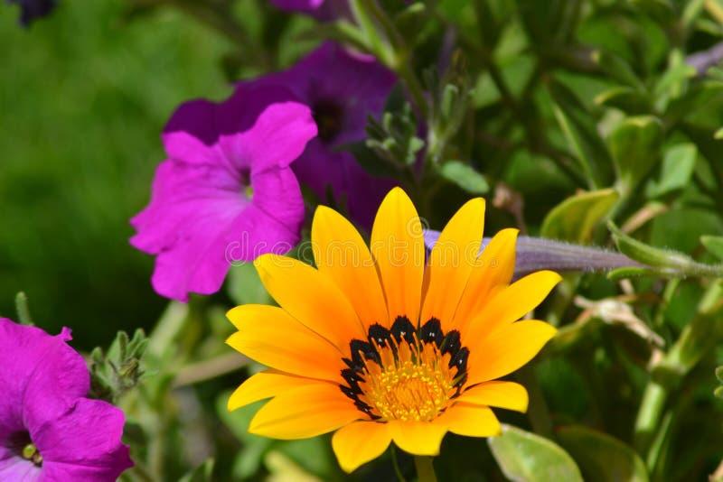 Violette en gele bloemen royalty-vrije stock foto's
