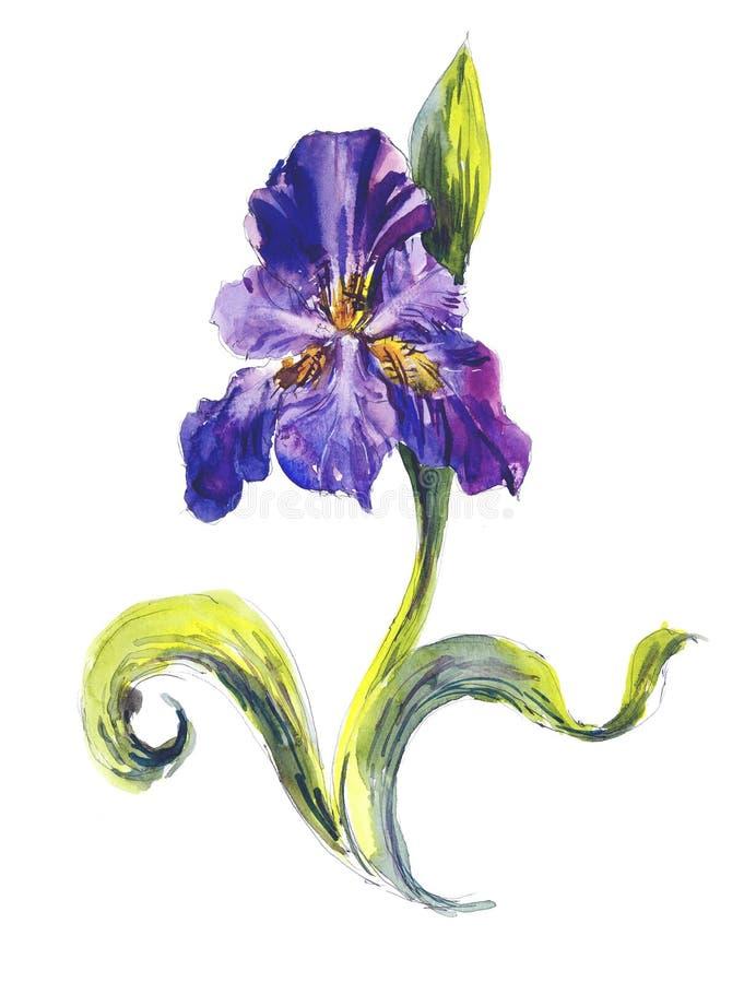 Violette Iris Bloemachtergrond De tekeningsillustratie van de waterverfhand royalty-vrije illustratie