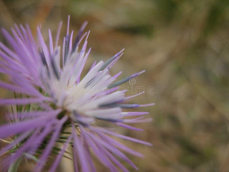 Violette kleine Blume lizenzfreies stockbild