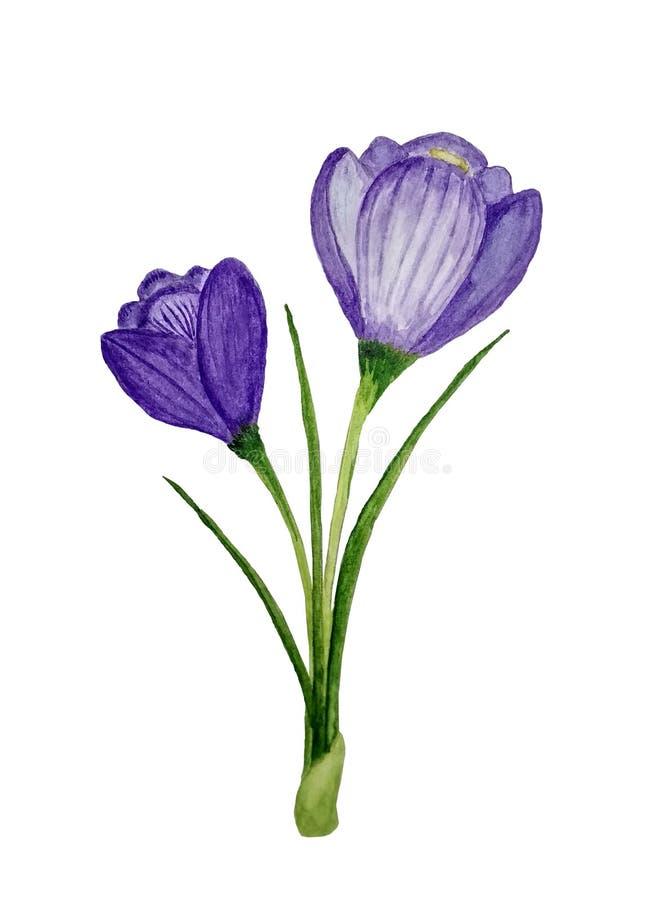Violette krokusbloem De lenteschoonheid stock foto