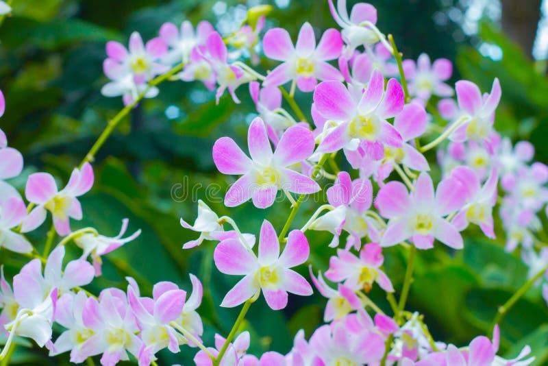 Violette Orchideeblumen lizenzfreie stockfotos