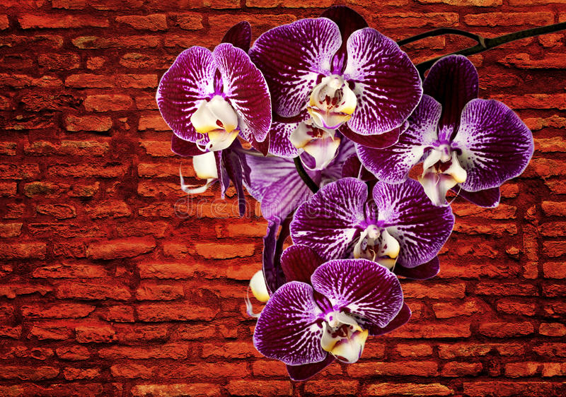 Violette Orchideen stockfoto