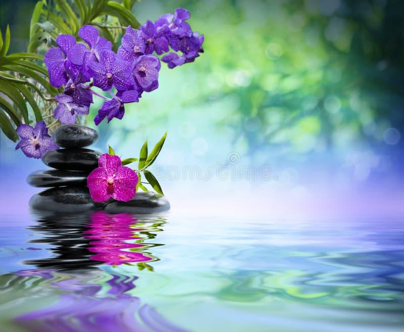 Violette Orchideen, schwarze Steine lizenzfreie stockfotos