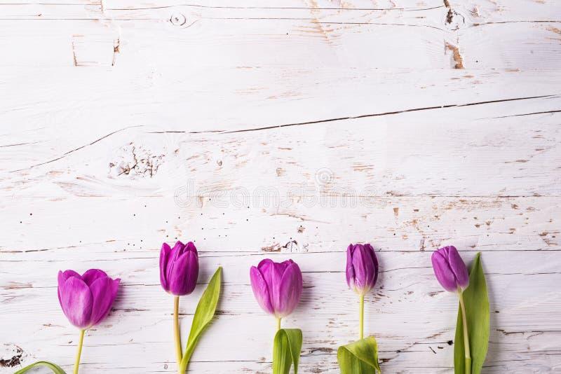 Violette tulpenbloemen op een witte houten achtergrond De ruimte van het exemplaar stock foto