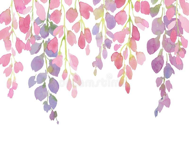 Violette und rosa Glyzinieblumen, Aquarellhandmalerei auf weißem Hintergrund vektor abbildung
