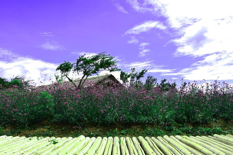 Violette Verbeneblumen auf unscharfem Hintergrund und Morgenlicht im Garten Wenn die geschnittenen Bambusstücke für Produkt adver lizenzfreies stockbild