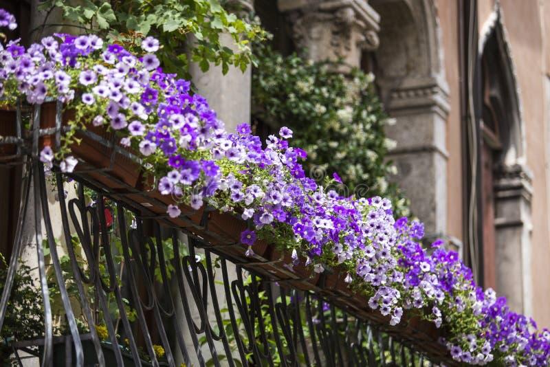 Violetter Blumentopf auf Balkon lizenzfreie stockbilder
