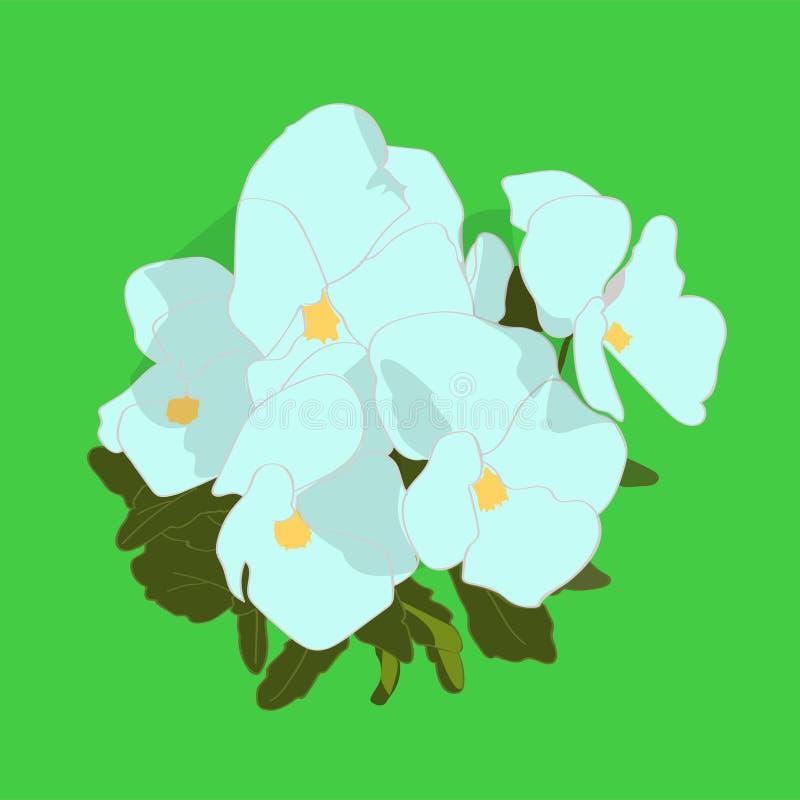 Violettes blanches illustration libre de droits