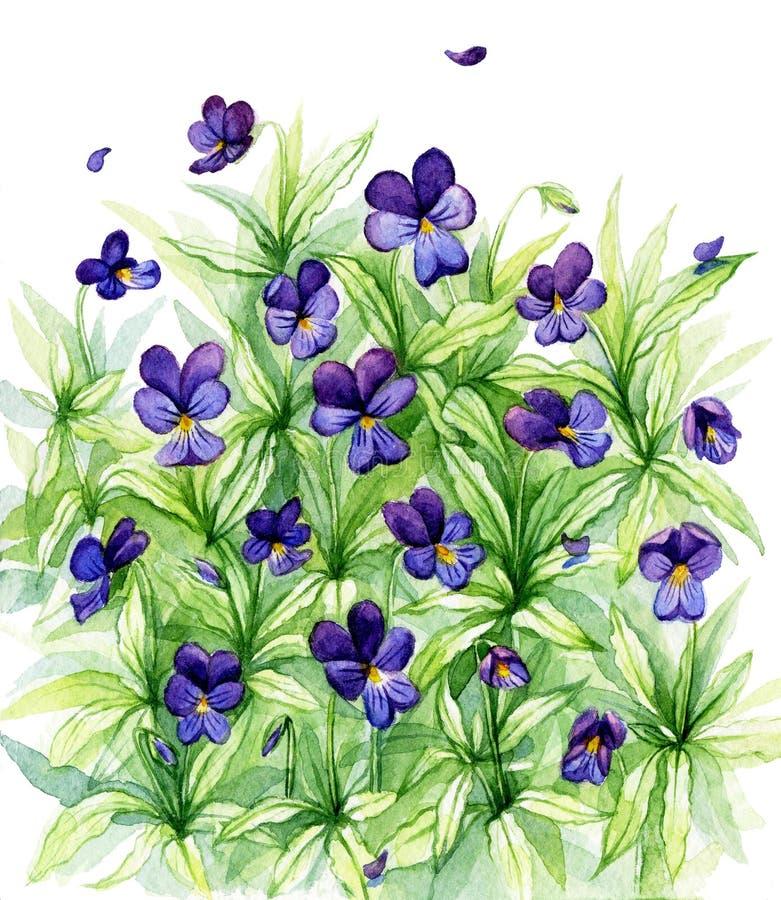 Violettes sauvages de forêt d'aquarelle photos stock