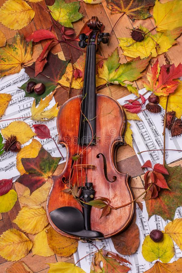 Violin and autumn leaves. Violin and notes of autumn leaves chestnuts stock photo