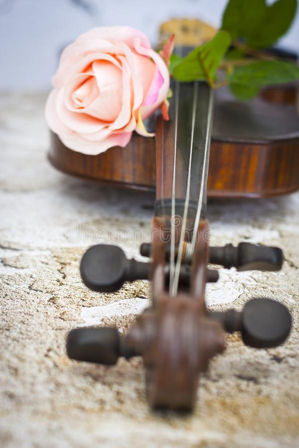 Violin and pink rose royalty free stock photo
