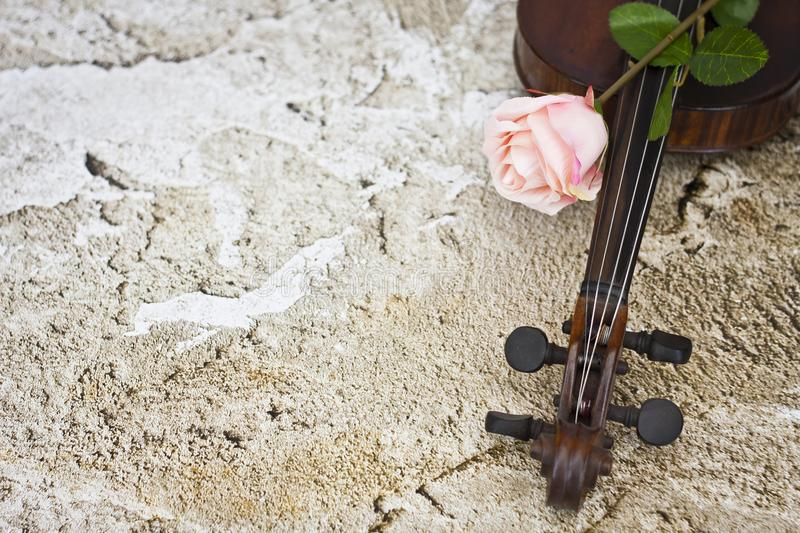 Violin and pink rose stock images