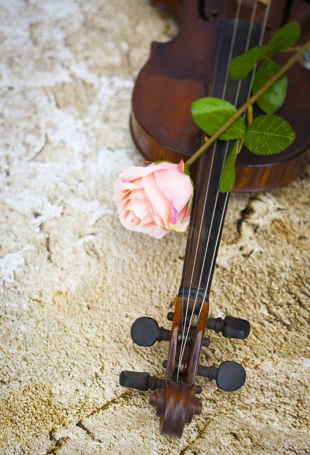 Violin and pink rose stock photos