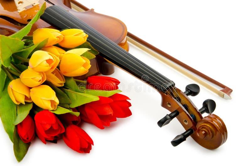 Violin and tulip flowers stock photos
