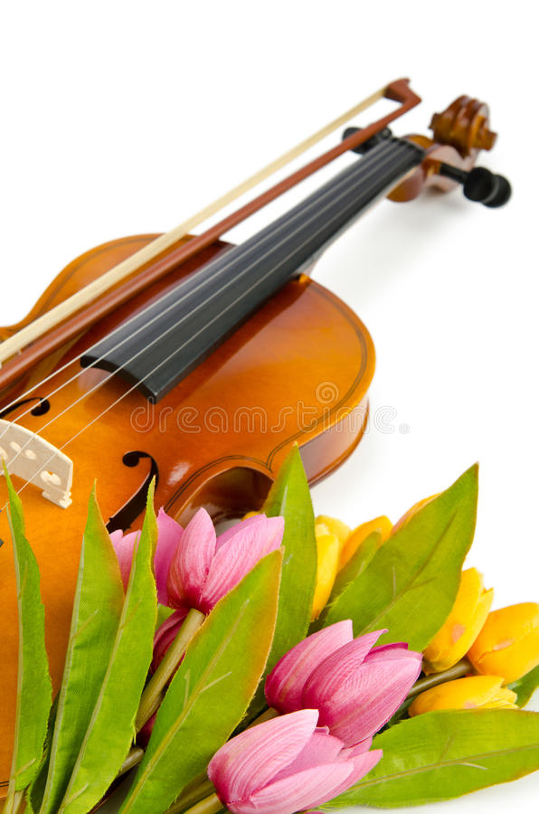 Download Violin And Tulip Flowers Royalty Free Stock Image - Image: 23681576