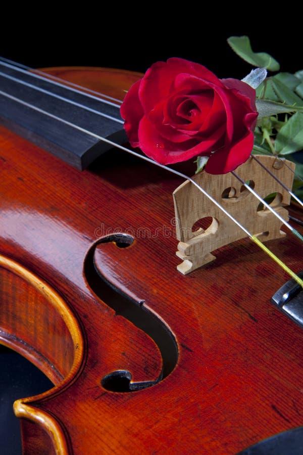 Violin Viola and Red Rose royalty free stock photos