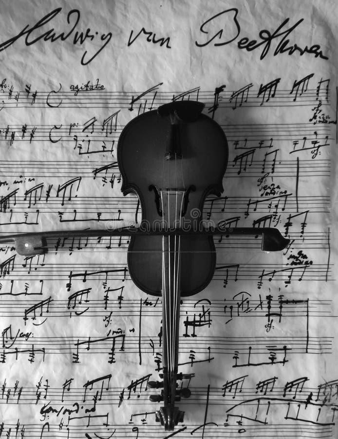 Violine черно-белое стоковое фото
