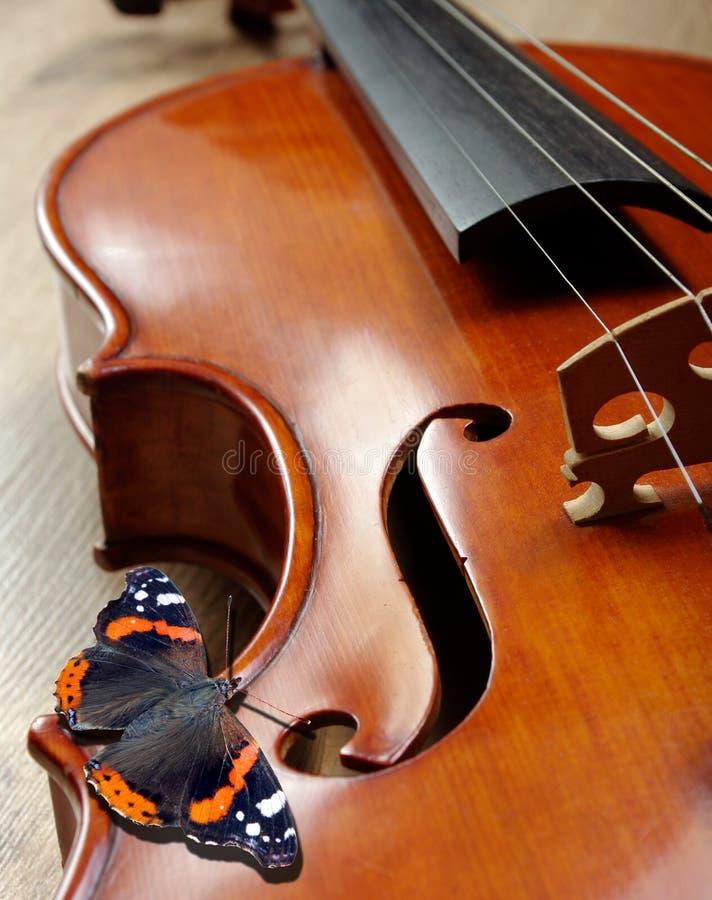 Violino e farfalla collo di un violino Grande carapace della farfalla immagine stock