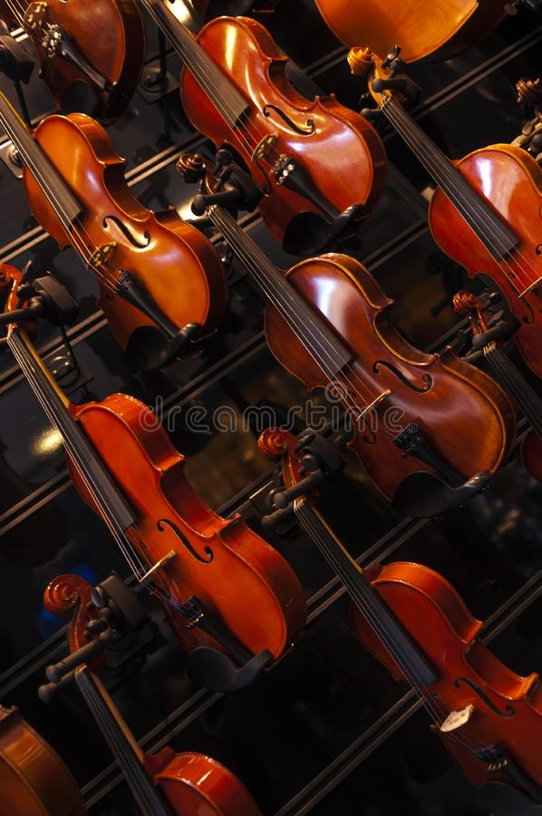 Violins on the wall. Row of sparkling new violins, stringed musical instruments on sale stock photo