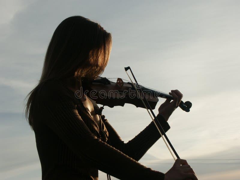 Violon photos stock