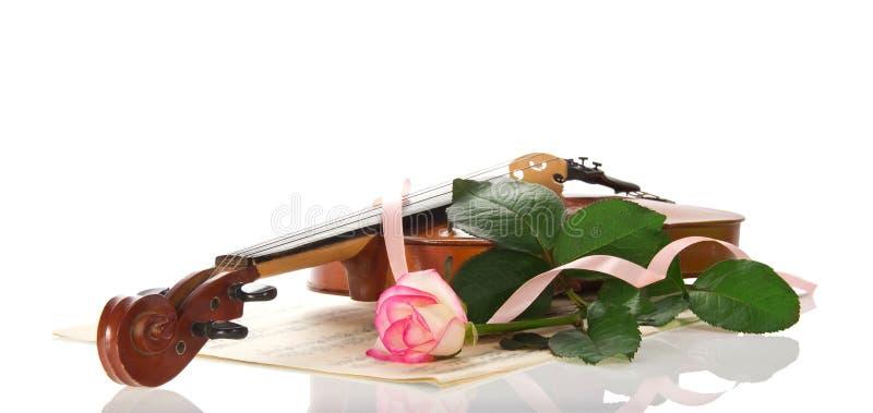 Violon, notes, la rose photo stock