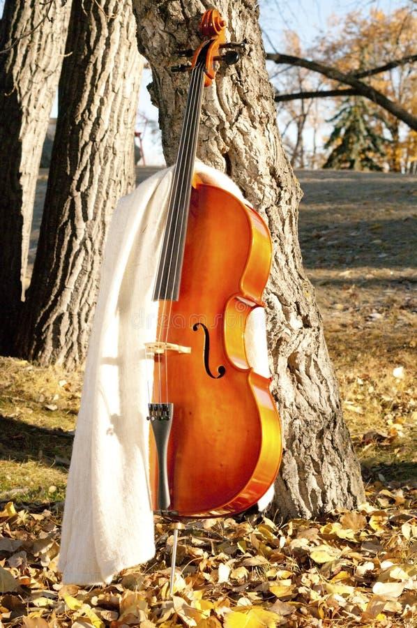 Violoncell med filten utomhus i parkera i nedgånghöstdag med royaltyfria bilder