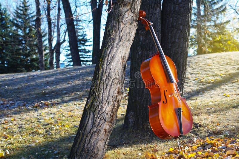 Violoncelle dehors en parc dans le jour d'automne d'automne avec la prairie colorée photos stock