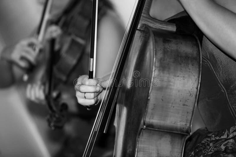 violoncello стоковая фотография