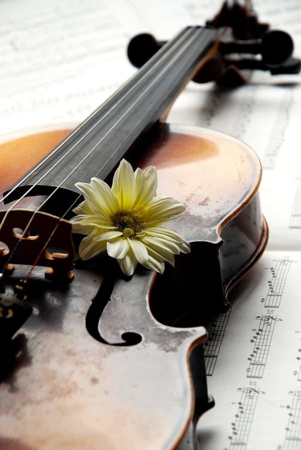 Viool, bloem op muziekdocument royalty-vrije stock foto
