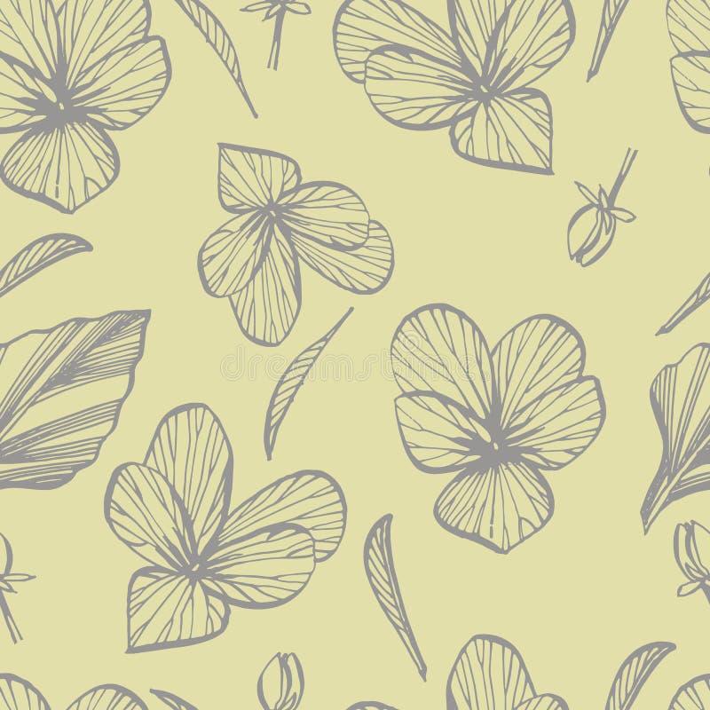 Viooltje of madeliefjebloem Botanische illustratie Goed voor schoonheidsmiddelen, geneeskunde, behandelend, aromatherapy, verzorg royalty-vrije stock fotografie