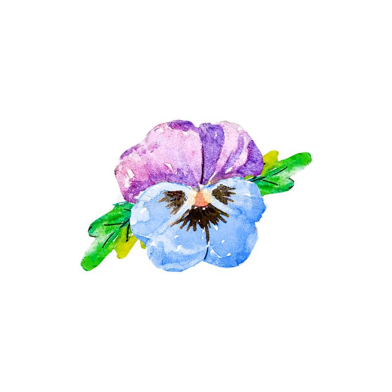 Viooltje violette tricolor, wilde pansies, violaceae, eetbare bloem, blauw en purper gekleurd viooltje met zwarte in midden, symb stock illustratie