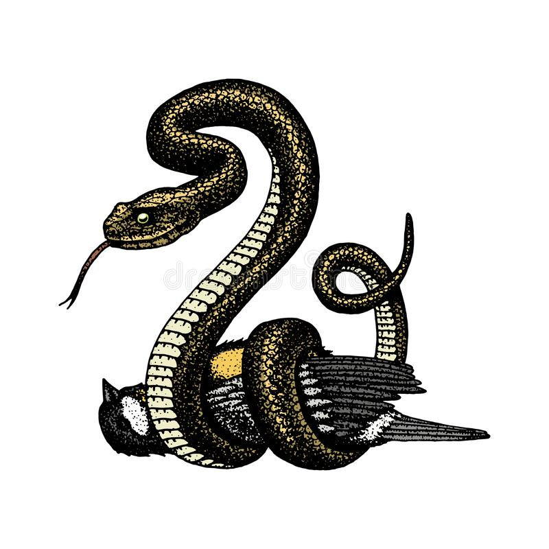 Viper snake. serpent cobra and python, anaconda or viper, royal. engraved hand drawn in old sketch, vintage style for vector illustration
