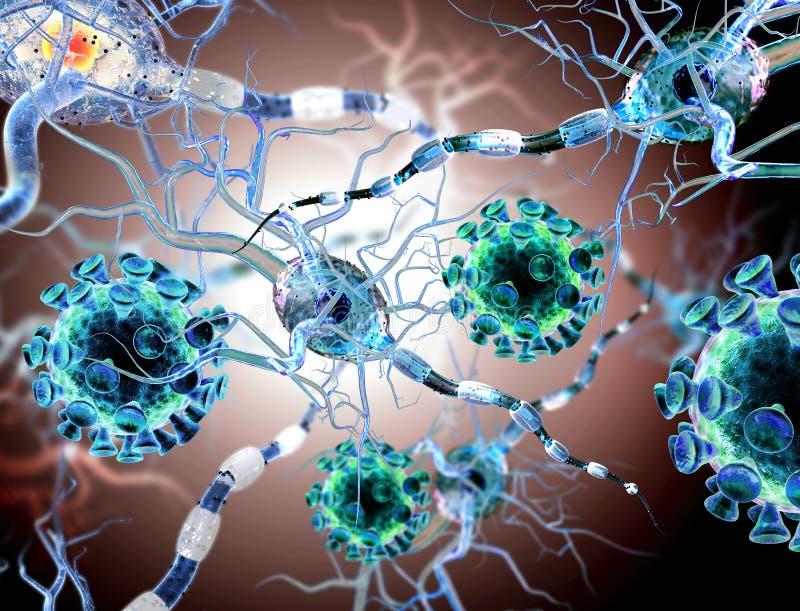 Viren, die Nervenzellen in Angriff nehmen stockfotos