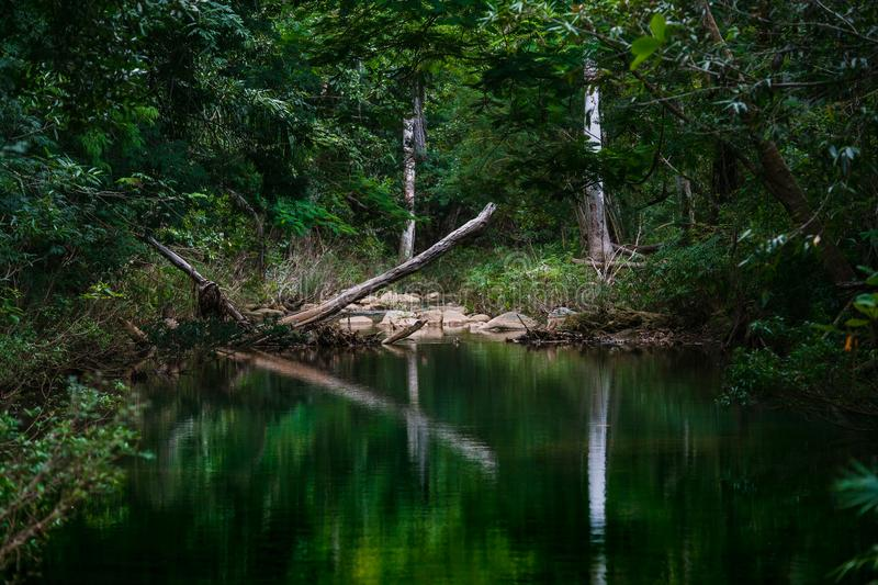 Virgin forest from Cuba royalty free stock photography