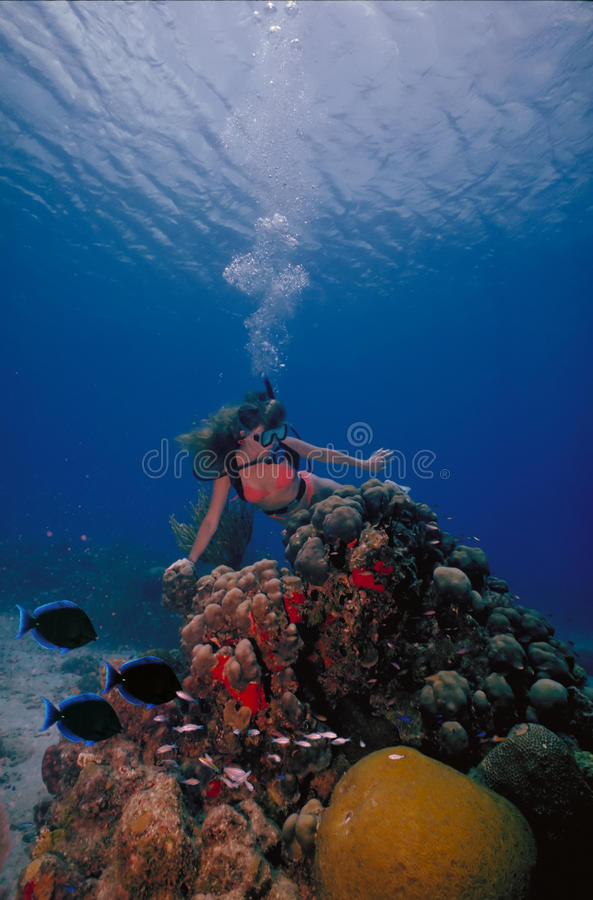 VIrgin Islands Caribbean Scuba Girl 2. A scuba diving girl in a bikini poses above the coral reef in the warm waters at St. Croix Island in US Virgin Islands royalty free stock images