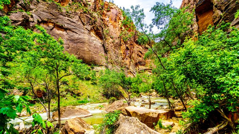 The Virgin River as it carved its way through the Sandstone Mountains of Zion National Park, UT, USA. The North Fork of the Virgin River as it flows through stock photos