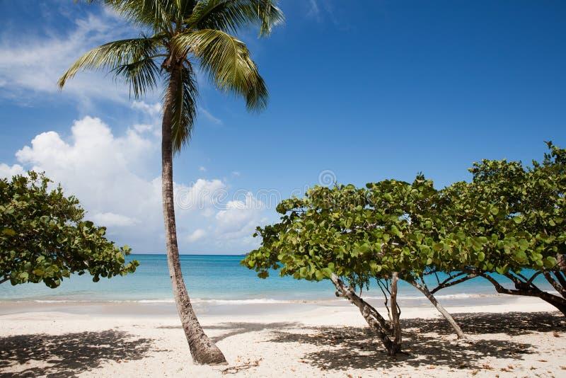 virgin st thomas u magens s островов залива стоковая фотография