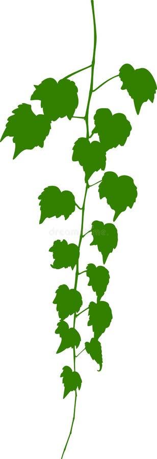 Virginia-Kriechpflanze. lizenzfreie abbildung