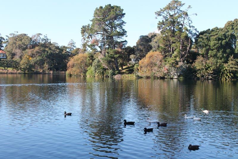 Virginia Lake l'après-midi agréable photographie stock libre de droits