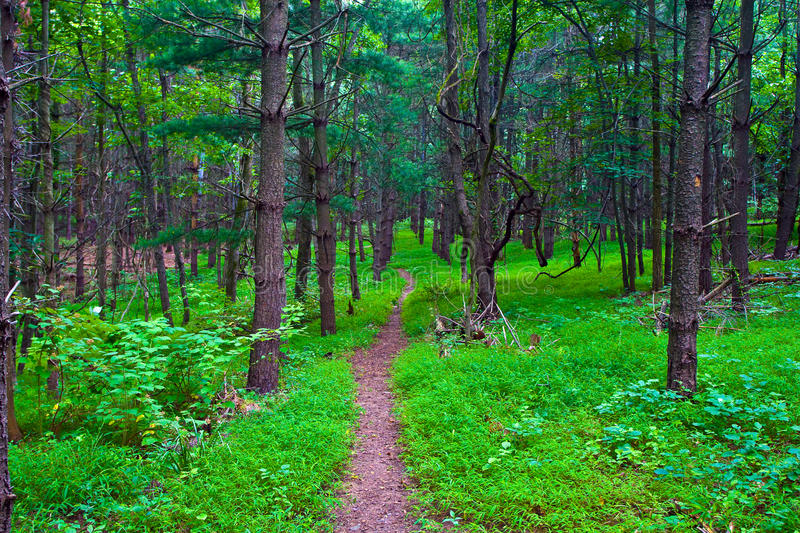 Virginia Lush Forest Trail Stock Photo