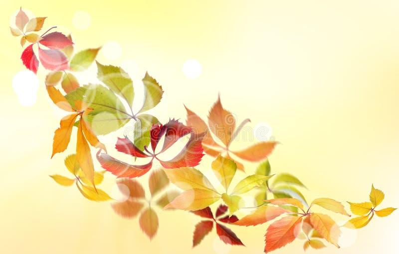 Virginia pełzacza jesień obraz royalty free