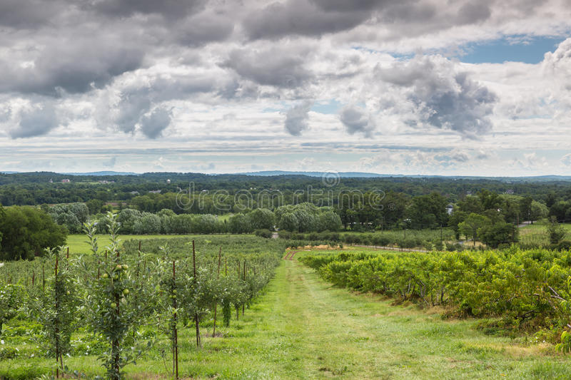 Virginia Rural Farmland Orchard immagine stock
