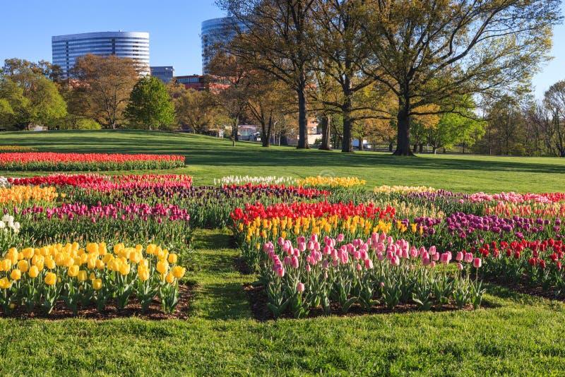 Virginia Tulip Field Spring Landscape royaltyfri bild