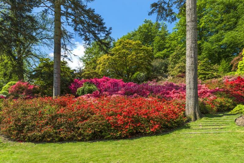 Virginia Water Park em Surrey, Reino Unido imagem de stock royalty free