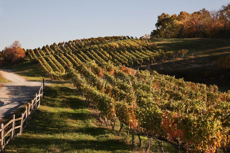 Virginia Wine Country in autunno fotografia stock