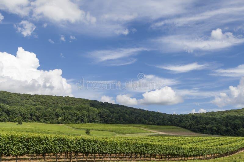 Virginia Winery royalty free stock image