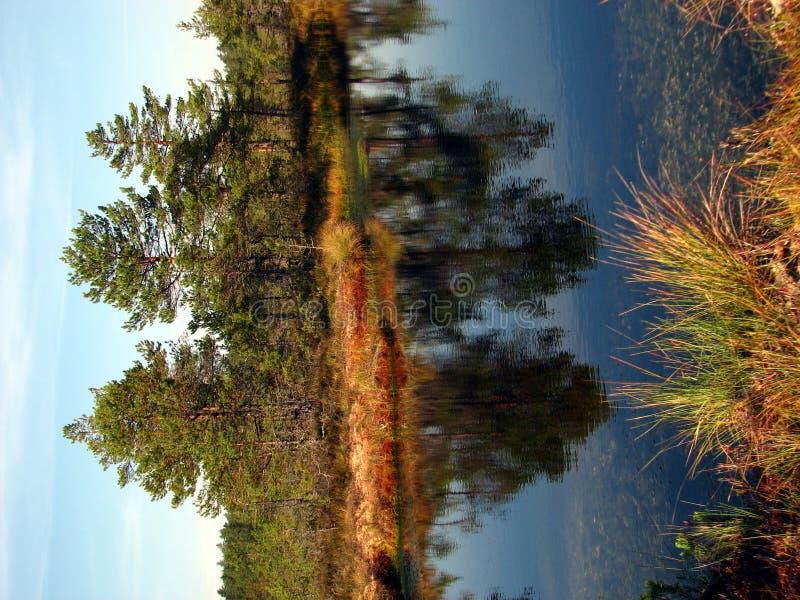 Free Viru Bog Stock Image - 1338621