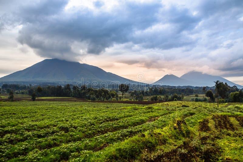 Virunga火山与绿色农田领域的国家公园风景 免版税库存照片