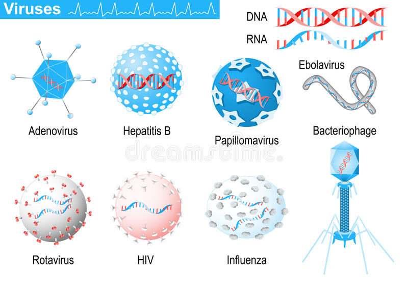 virus ARN y DNA Infographic médico fijado con los iconos del viru stock de ilustración