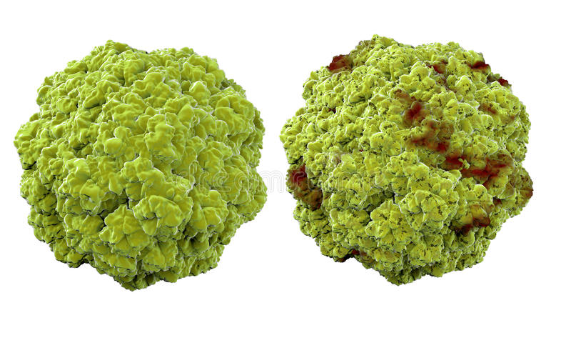 Virus, bacteriën, microbe het medische anatomieconcept, isoleert stock afbeelding